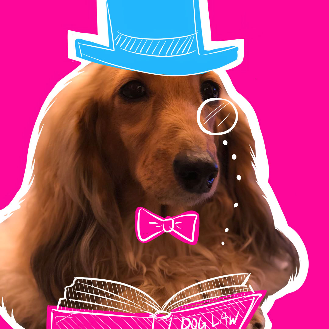A dog wearing a illustrated pink bowtie and blue tophat reading a law book
